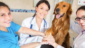 Çarptığınız hayvanın veteriner masrafını sigorta firmanız öder